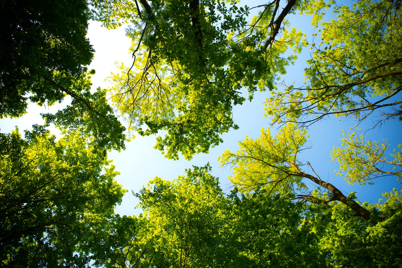 Autor de la imagen: Valiphotos. Pexels.com